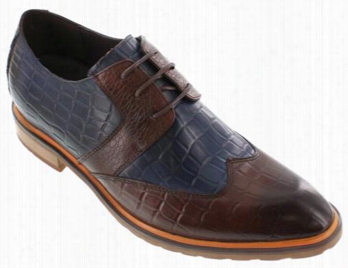 Calto  - G329082 - 2.6 Inches Taller (blue/brown)